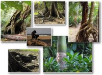 TreesComp02