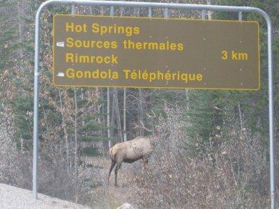 Ikke uvanlig med villdyr som står og spiser langs veien