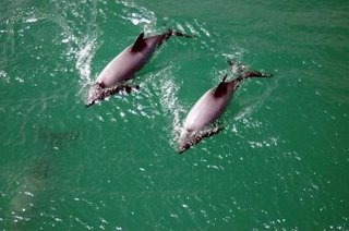 Vacation in Newzealand