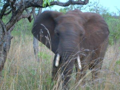 Disco_Elephant.jpg