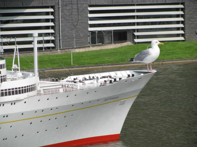 The Seagull Express
