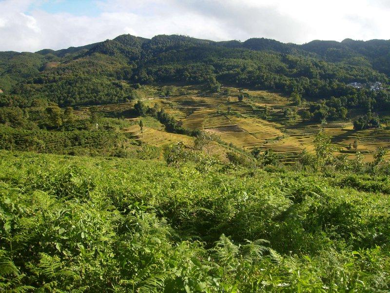 1042 China Yuanyang - Ricefields
