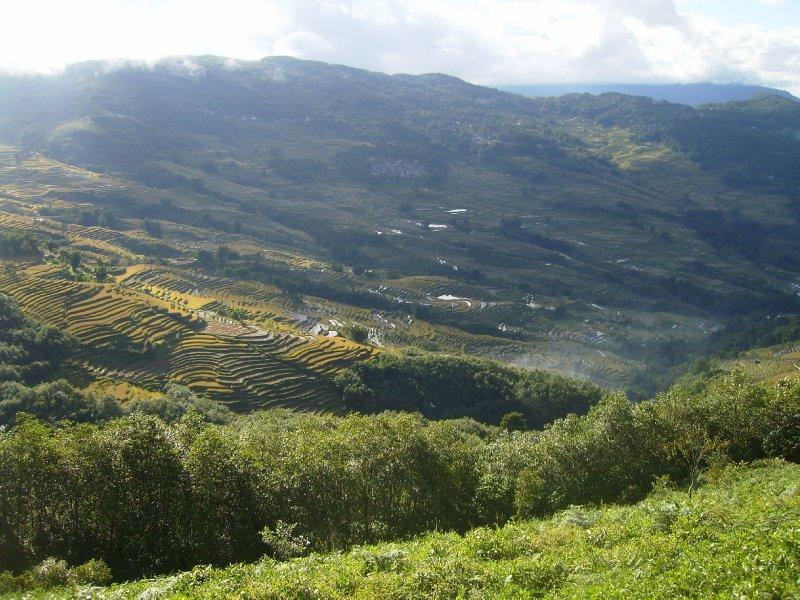 1043 China Yuanyang - Ricefields