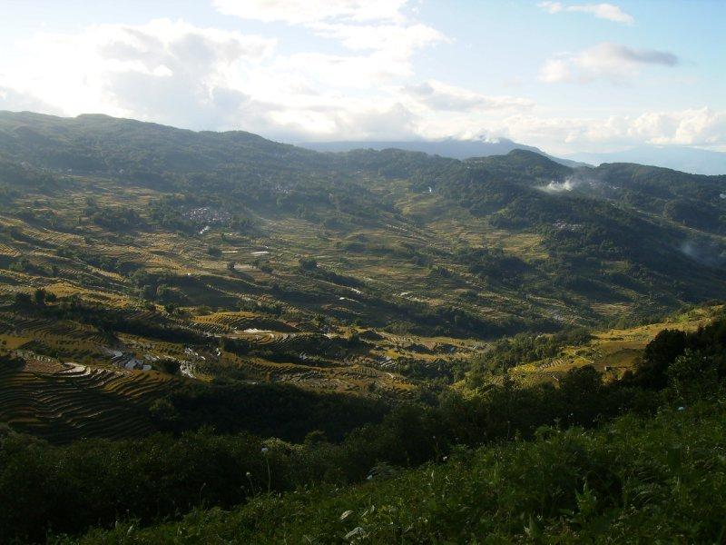 1053 China Yuanyang - Ricefields