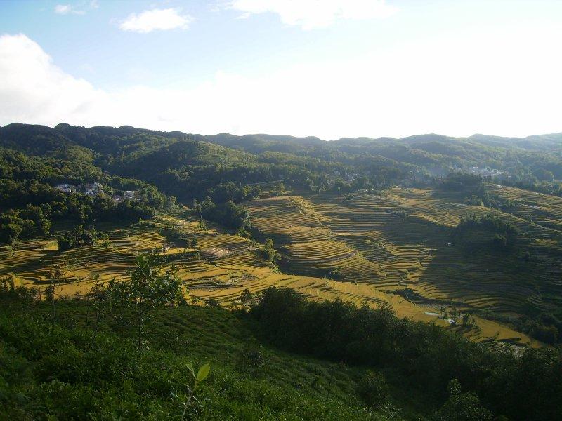 1054 China Yuanyang - Ricefields