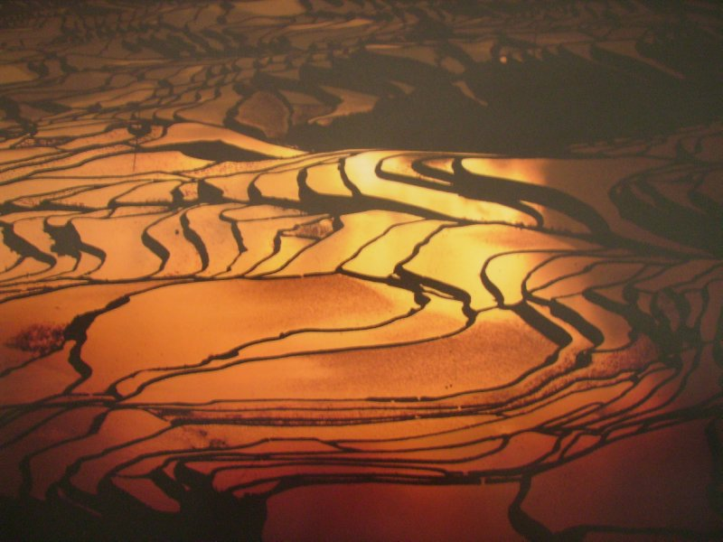 1061 China Yuanyang - the ultimate picture of the ricefields