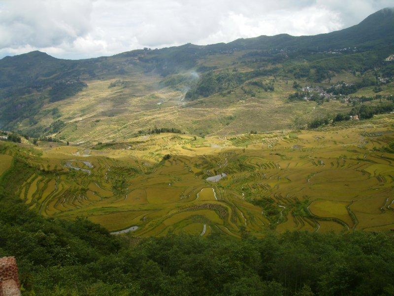 1062 China Yuanyang - Ricefields