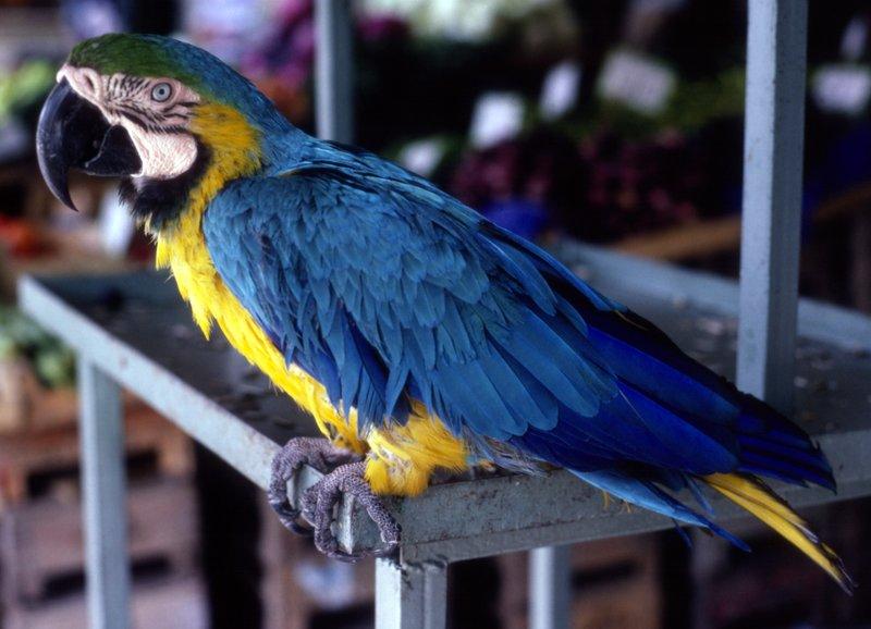 Colourful Bird Athens Markets 1988