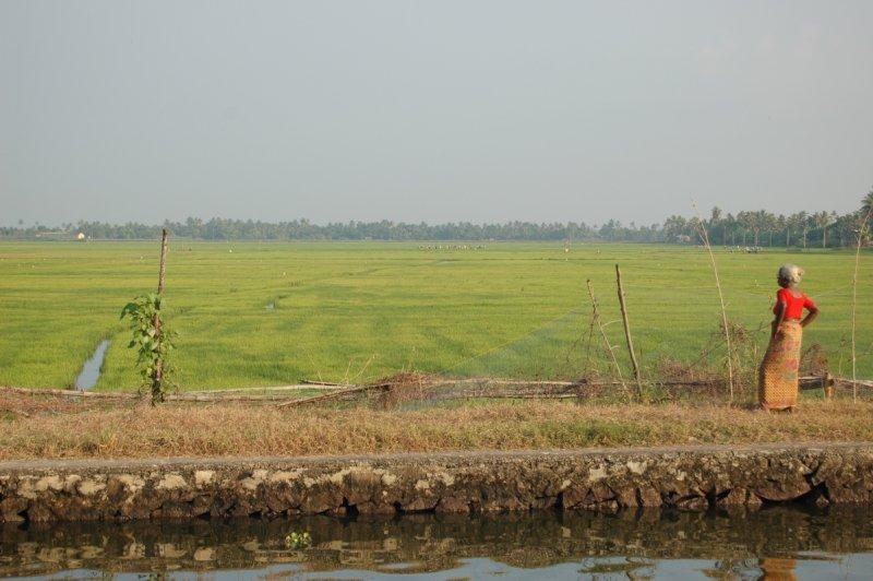 Rice field backwaters