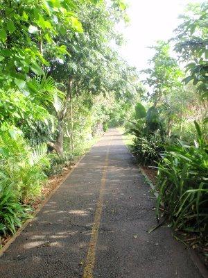 Hawaii_015.jpg
