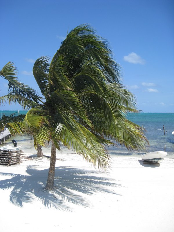 Solitary Palm on a White Sand Beach