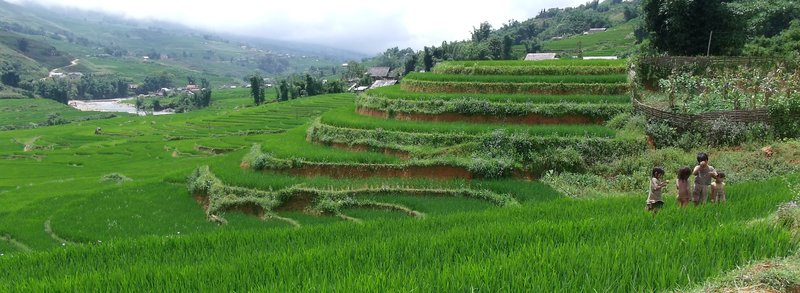 Children foraging in the rice paddies of Sa Pa, Vietnam