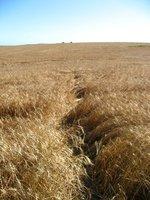 Prince Edward Island fields
