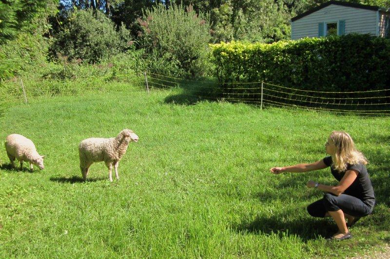 immernoch auf Schafjagd