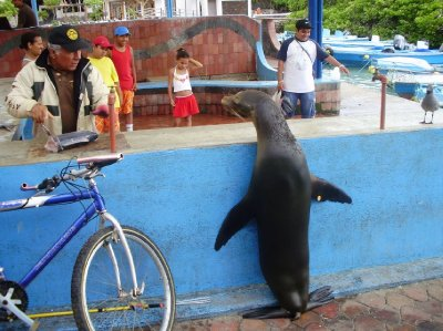 Galapagos 12
