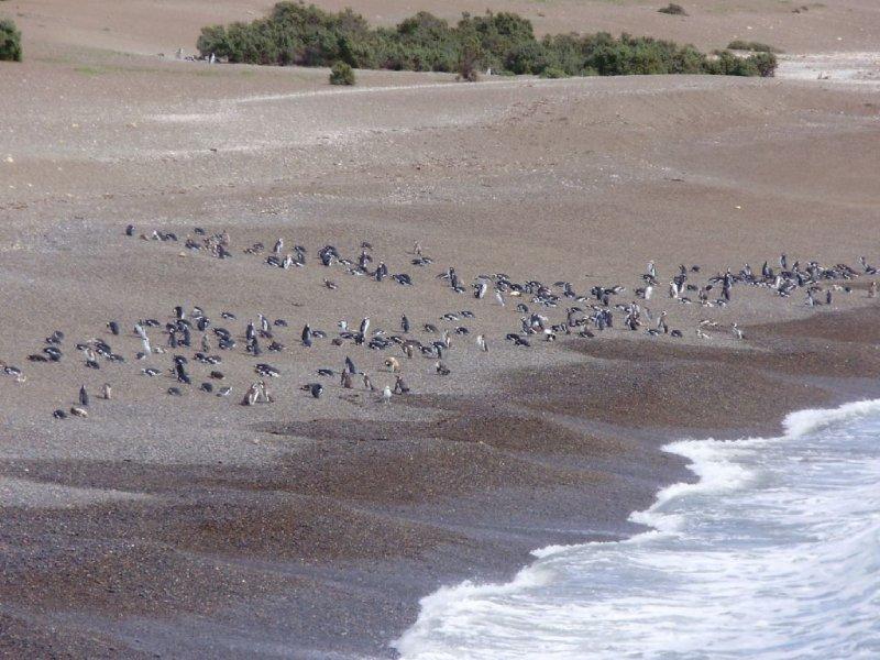 large_Punta_Tombo_16.jpg