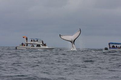 Walflosse und Boot