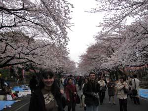 Tokyo-cherry_trees.jpg