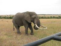 Elephant_2_.jpg