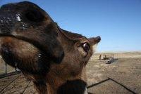 Friendly Elk