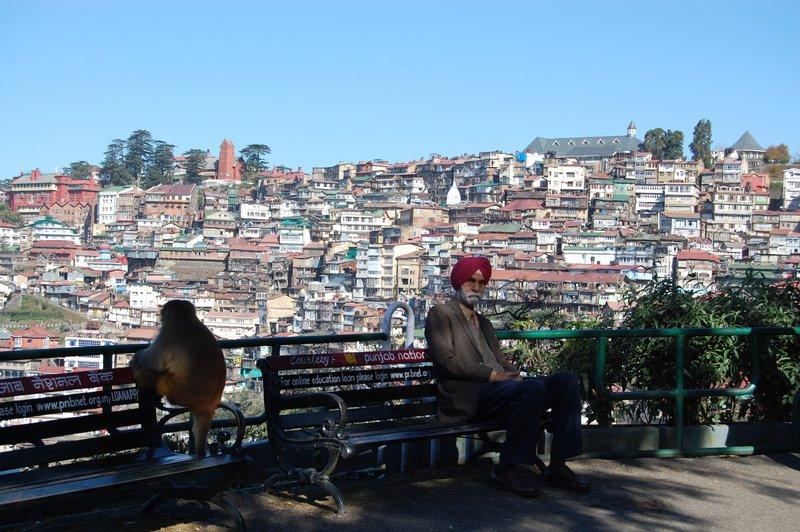 Monkey admiring view - Shimla