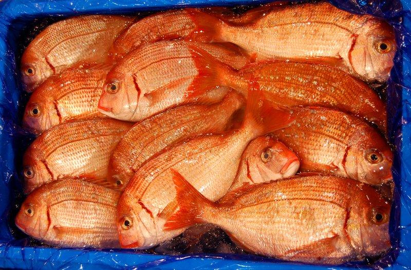 Box of fish