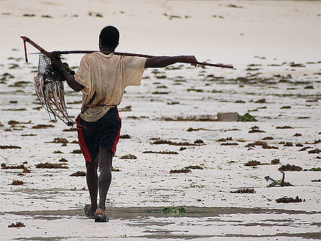 octopus hunting game in jambiani