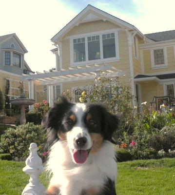 Cooper in Monterey