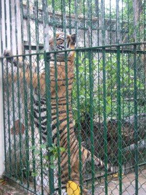 401_Botani..and_Zoo.jpg