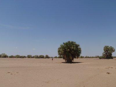 Hot Desert!!