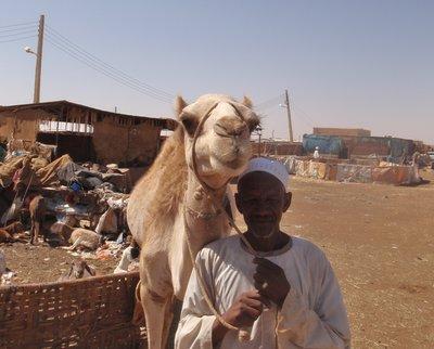 A Single Camel
