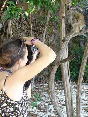 monkeyphoto.JPG
