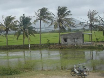 rice fields2.JPG