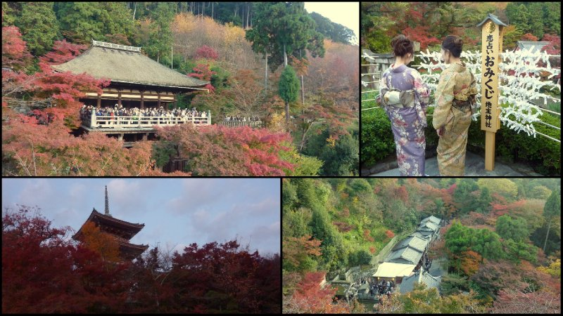 large_7Kyoto_November_20102.jpg