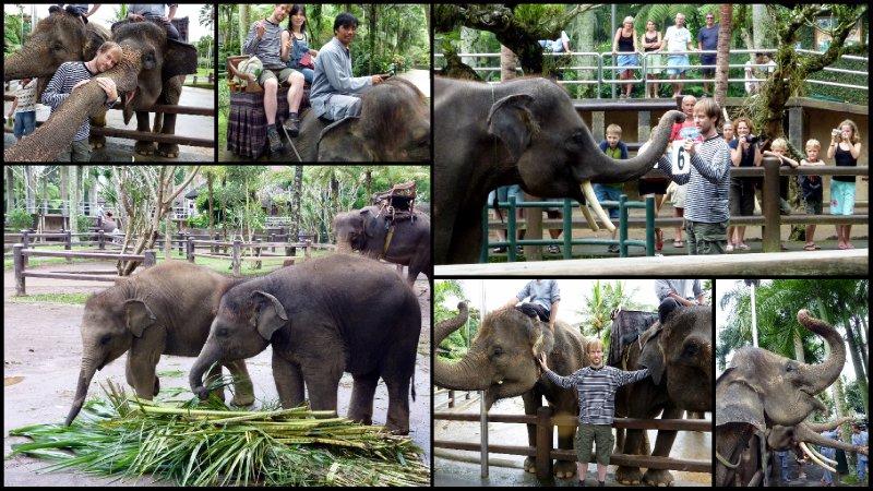 large_Bali_Holiday23.jpg