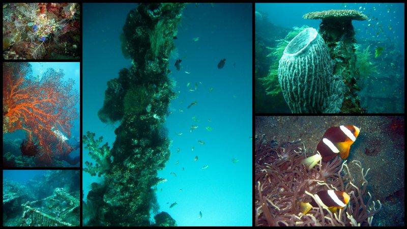 large_Bali_Scuba_Diving1.jpg