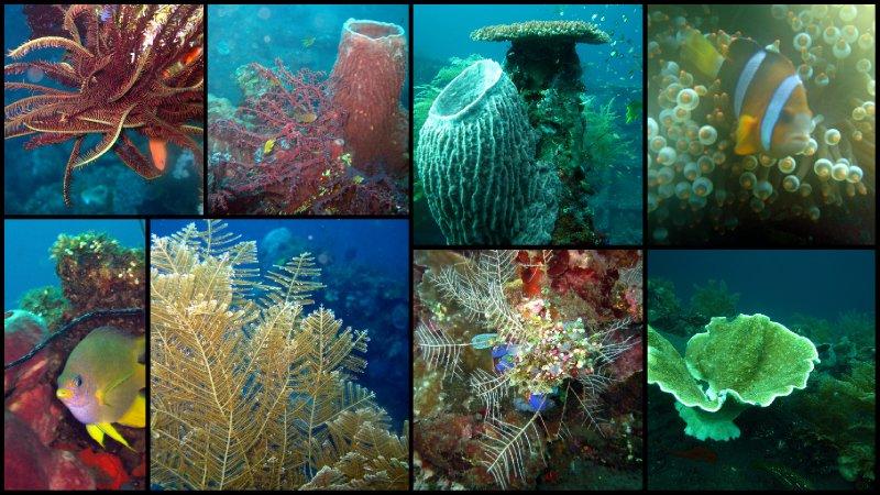 large_Bali_Scuba_Diving6.jpg