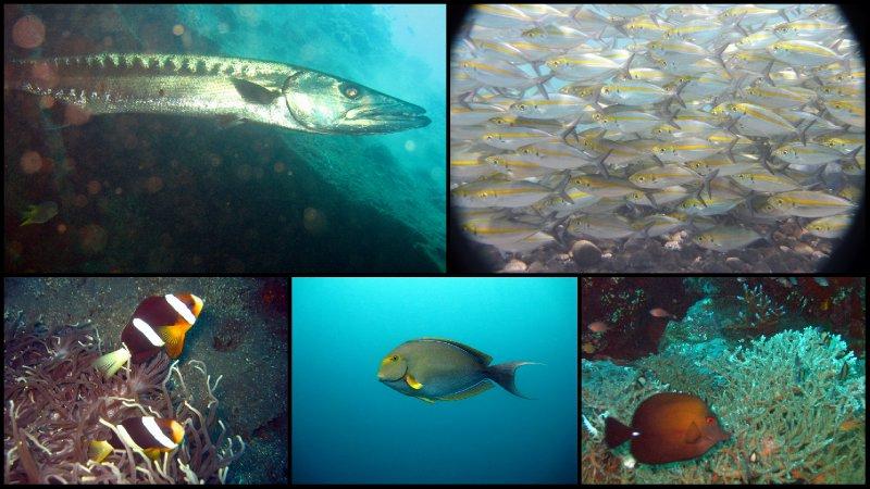 large_Bali_Scuba_Diving7.jpg