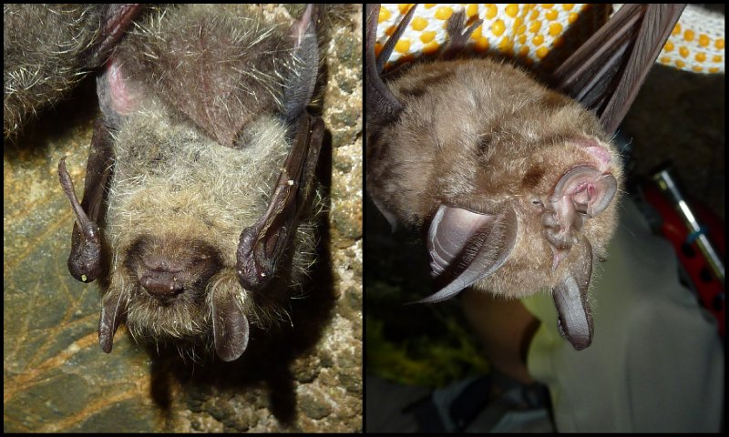 large_Bat_Research__Taga3.jpg