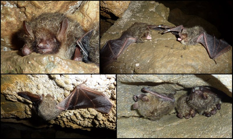large_Bat_Research__Taga4.jpg