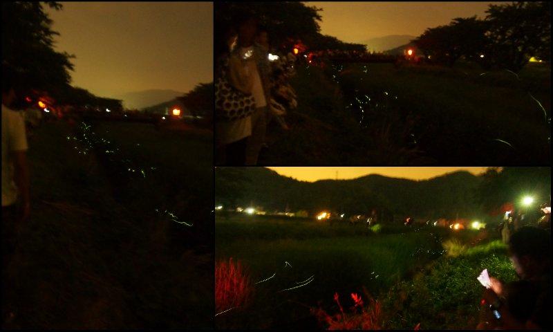 large_Fireflies3.jpg