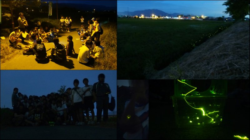 large_Fireflies5.jpg