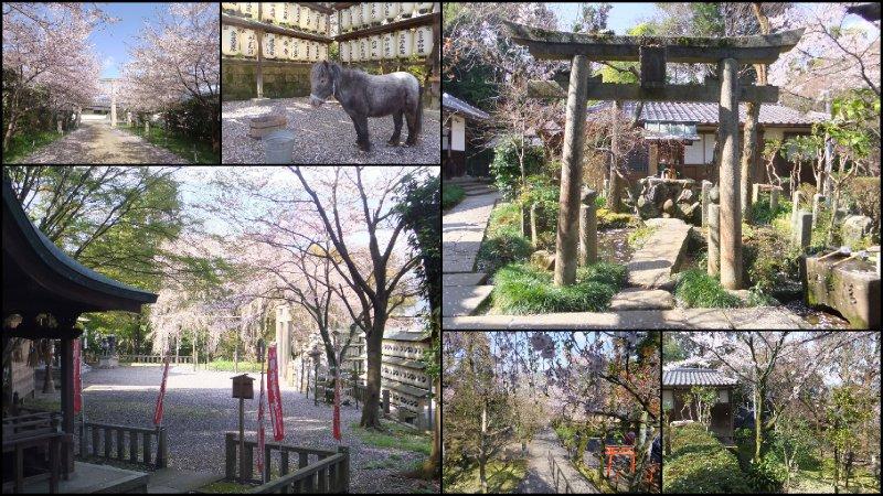 large_Hanami_2012-001.jpg