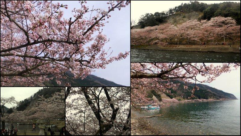 large_Hanami_2012.jpg