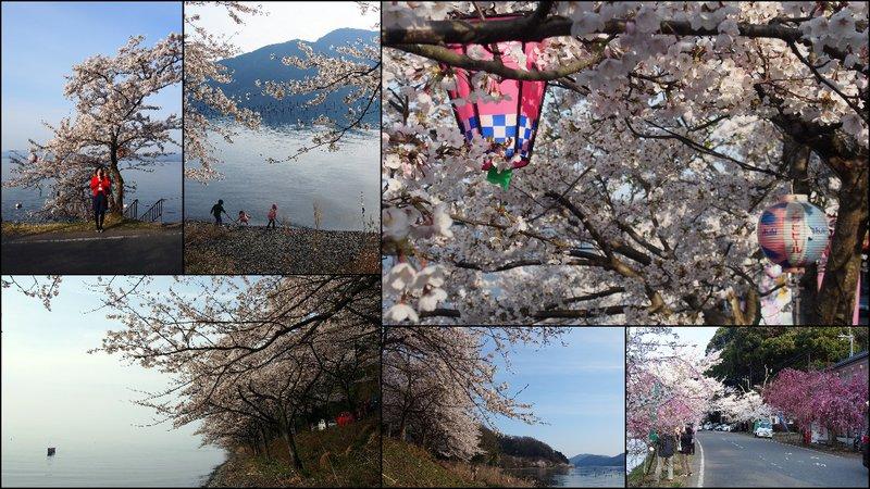large_Hikone_Hanami.jpg