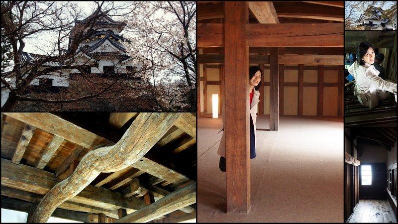large_Hikone_Hanami3.jpg