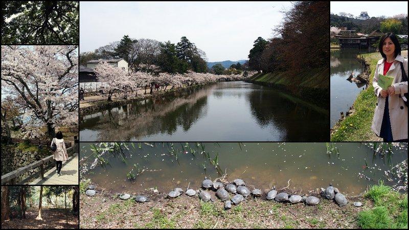 large_Hikone_Hanami6.jpg