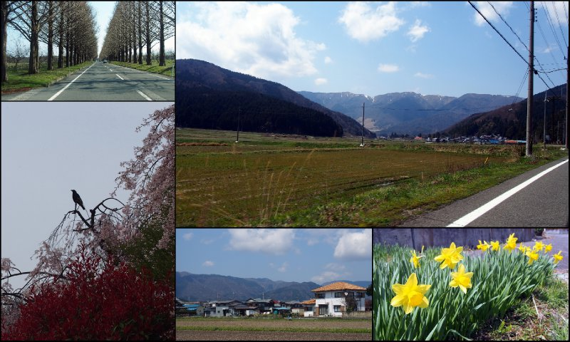 large_Local_Hanami.jpg