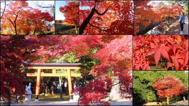 large_Nara_Momiji1.jpg