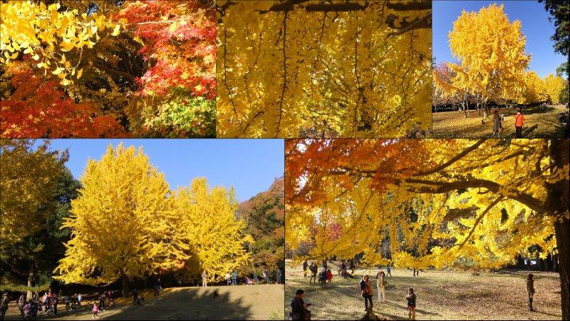 large_Nara_Momiji4.jpg